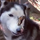 dog meets butterfly friend