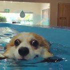 Adorable puppy swimming