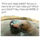 Wholesome seal