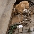 wholesomegifs