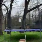 Cat Stuck On Trampoline