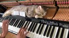 A cat lying on top of a piano whilst being played.