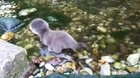Baby otter exploring water for the first time