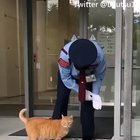 For the past 2 years these cats have been trying to get into this Japanese Museum