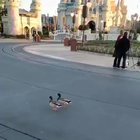 Donald and Daisy following 2 ducks