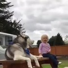 The final battle. Husky vs little girl