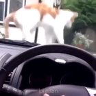 Jerk cat bullying poor driver gets what he deserves