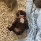 this is a video of a puppy dreaming