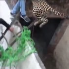 Leopard escaped in India