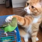 Cat petting a bird