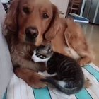 A kitten who clearly loves her pup.