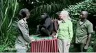 Chimpanzee shows his gratitude to the people who saved his life, while going back to the forest