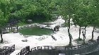 Elephants rush to rescue baby elephant that fell in pool