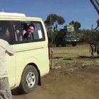 WCGW if I poke my head out for the safari video