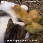Kitty adopts ducklings