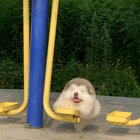The fluff ball sure loves to swing