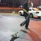 Crackhead puts a possum on a leash