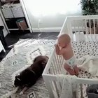 Nanny cam captures a dog attacking the crying baby ........ with a kiss😘😄🌺❤️