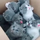 Enjoy this box full of kittens