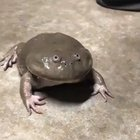 Cursed_frog