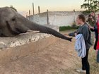 Girl gets smacked by an elephant
