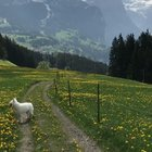 Taking the dog for a walk in Switzerland
